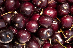 Free Cherries Stock Image - 42962651