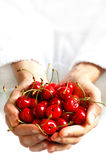 Cherries. Cupped hands offering fresh cherries Stock Photo