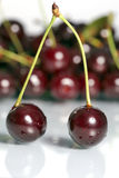 Cherries. Sour cherries with reflection, food and nutrition at spring Royalty Free Stock Image