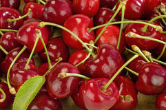 Cherries. Red, tasty, shiny cherries and the leaf Stock Photos
