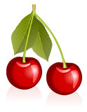 Cherries. Illustration of cherries over white Royalty Free Stock Photography