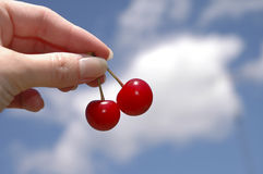 Cherries. A hand holding two cherries. A blue sky serves as a backdrop stock images