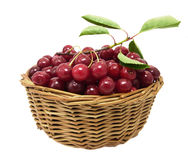 Cherries in a basket Stock Image
