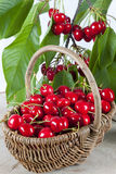 Cherries in basket Stock Images