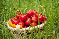 Cherries in a basket Royalty Free Stock Photo