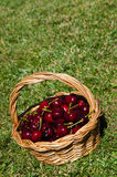 Cherries in a basket Stock Images
