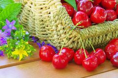 Cherries in basket Stock Photos
