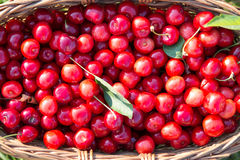 Cherries in a basket - Close up Stock Photo