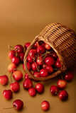Cherries in a basket on a gold background. Royalty Free Stock Images