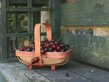 cherries in basket on a rustic seat. Royalty Free Stock Photography