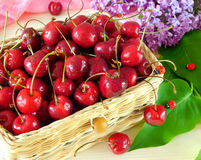 Cherries in a basket Stock Photography