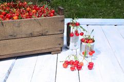 Cherries. Royalty Free Stock Image
