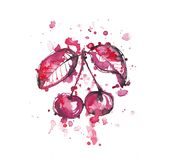 Cherries. Beautiful branch with berries, watercolor illustration creative design for cherries Royalty Free Stock Photo
