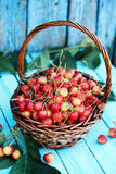 Cherries on blue board Royalty Free Stock Images