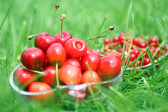 Cherries in bowl Royalty Free Stock Photography