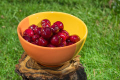 Cherries in a bowl Stock Images