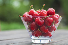 Cherries. In a bowl.  Fresh from the garden Royalty Free Stock Image