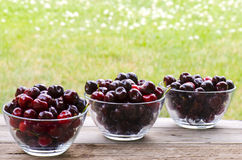 Cherries in 3 bowls on wood. On grass background Stock Image
