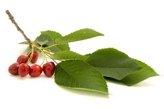 Cherries on the branch Royalty Free Stock Images