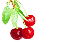 Cherries on a branch Royalty Free Stock Images