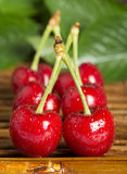 Cherries and branch with leaves Royalty Free Stock Photography