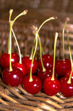 Cherries Cherries. More than just a delicious fruit, cherries are low in calories, high in fiber and packed full of nutrients Royalty Free Stock Photography