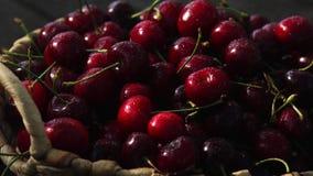 Cherries. Cherry. Cherries in color bowl and kitchen napkin. Red cherry. Fresh cherries stock video