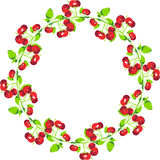 Cherries Circle Shape Royalty Free Stock Photography