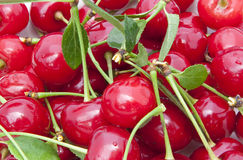 Cherries close up Stock Images