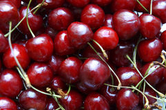Cherries in close up. Sweet cherries, selective focus on nearest royalty free stock photo