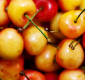Cherries. Closeup image some Rainier cherries Stock Image
