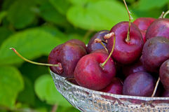 Cherries in a crystal bowl Royalty Free Stock Image