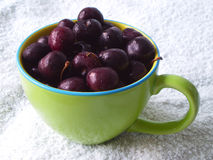 Cherries in a cup Royalty Free Stock Photos