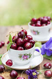 Cherries in the cup on wooden table. Cherries in the beautiful cup on wooden table Stock Photography