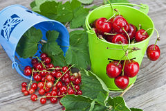 Cherries and currants. In small buckets directly after harvest Royalty Free Stock Images