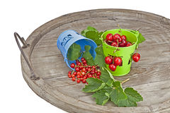Cherries and currants. In small buckets directly after harvest Stock Photos