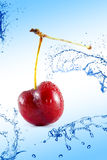 Cherries dropped into water Stock Photography