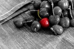 Cherries drying on a tea towel. Cherry drying on a tea towel with selective color Stock Images