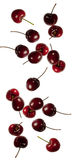 Cherries falling. Red cherries shot as if falling isolated Royalty Free Stock Photos