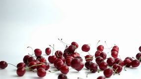 Cherries falling on white stock video footage