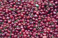 Cherries at the farmer's market. Crate of cherries at the farmer's market stock image