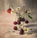 Cherries and flowers. Still life with cherries and flowers in a sunny summer day Royalty Free Stock Images