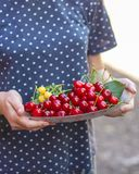 Cherries, fruit berries, harvest ripe and juicy fruits. top copy space. food background. Cherries, fruit berries, harvest ripe and juicy fruits. topncopy space royalty free stock photo