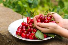 Cherries, fruit berries, harvest ripe and juicy fruits. top copy space. food background. Cherries, fruit berries, harvest ripe and juicy fruits. topncopy space royalty free stock photography
