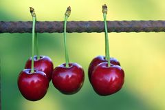 Cherries, Fruits, Fruit, Red Stock Photography