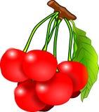 Cherries, Fruits, Red, Vitamins Stock Photos