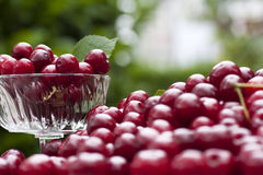 Cherries in a glass bowl with leaves Stock Image