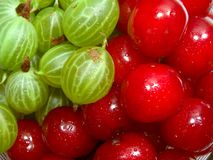 Cherries and gooseberries 1. Top view of cherries and gooseberries stock image