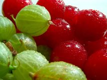 Cherries and gooseberries 4. Fresh cherries and gooseberries with drops on them stock images