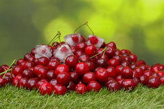 Cherries in grass. With some cherries in ice cubes Royalty Free Stock Images
